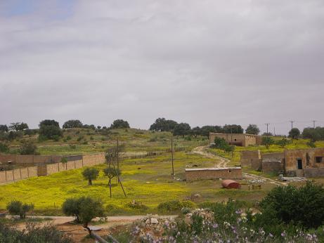 6. Если ливийцы хотят заниматься сельским хозяйством, они получают сельскохозяйственные земли, ферму, оборудование, семена и скот — бесплатно.